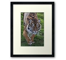 Tiger Stalk Framed Print
