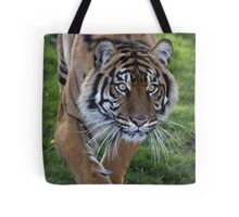 Tiger Stalk Tote Bag