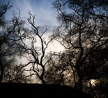 Tendrils of Trees by PigleT