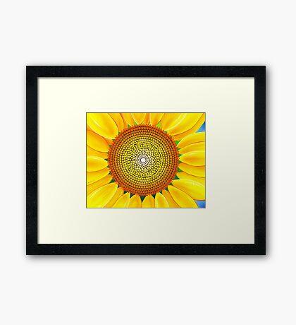 Beautiful sunflower of summer Framed Print
