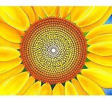 Beautiful sunflower of summer Photographic Print