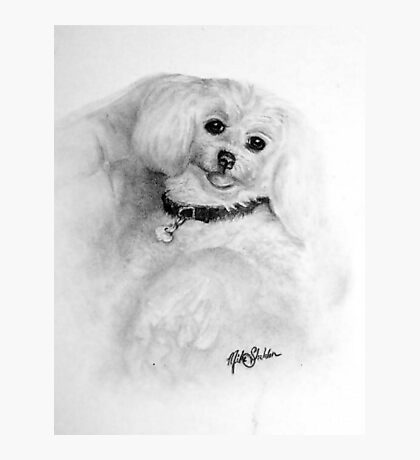 Pet  Poochie Photographic Print