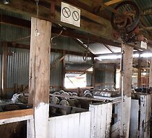 Shearing Shed Australia by Judy Woodman
