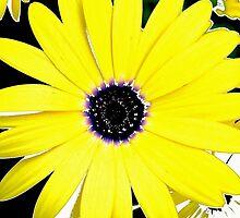 floral 62 by Chuck Landskroner