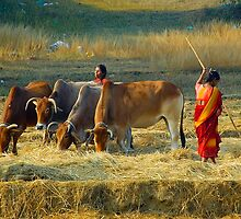 The Village Life-1 by Mukesh Srivastava