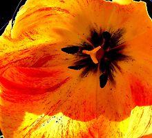 floral 65 by Chuck Landskroner