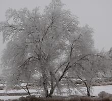 Tree in the Whiteout of Winter by Roz Fayette