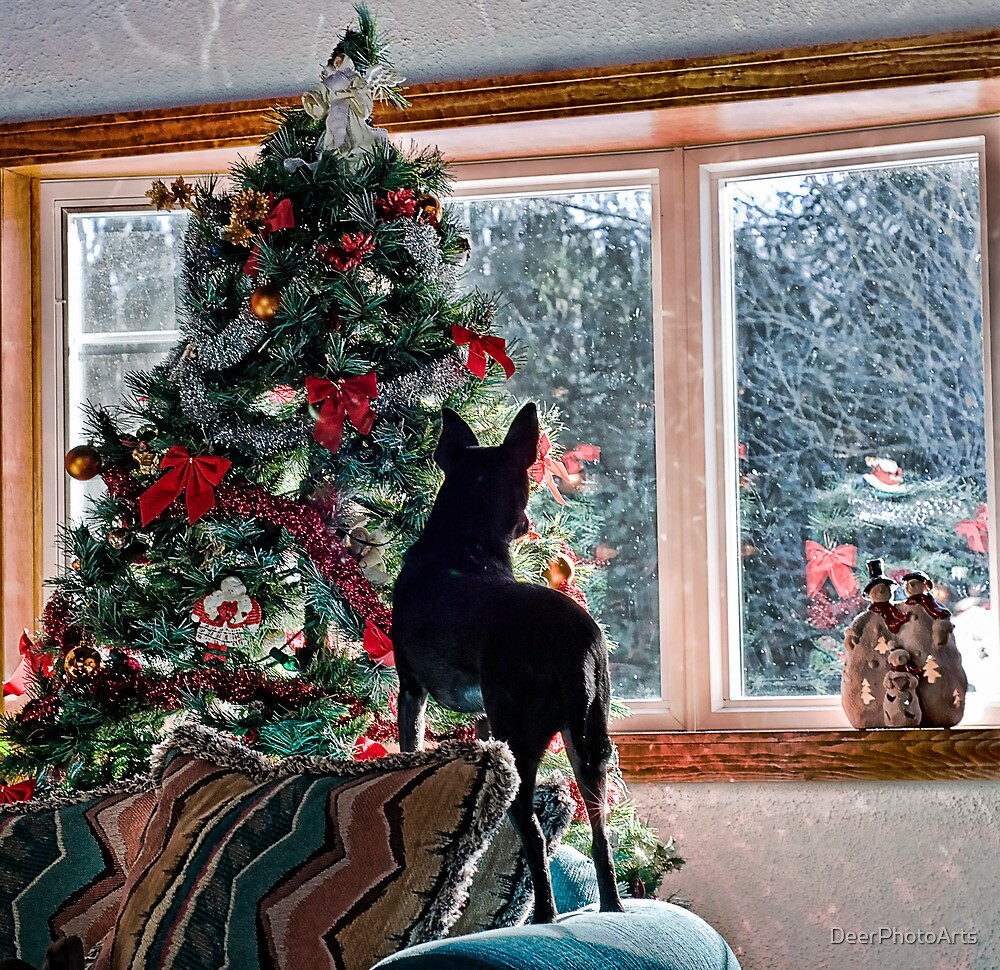 Waiting for Santa! by DeerPhotoArts