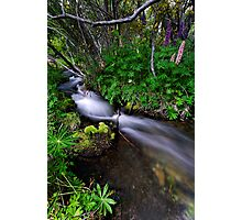 Little Lupin Creek Photographic Print