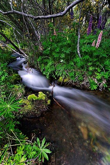 Little Lupin Creek by Robert Mullner