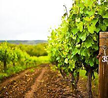 So many vines by Ruben D. Mascaro