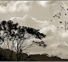 """""""The way of the wind""""  Tweed Valley, Australia by Ray Richardson"""