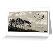 """The way of the wind""  Tweed Valley, Australia Greeting Card"