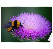 Pollen Please Poster