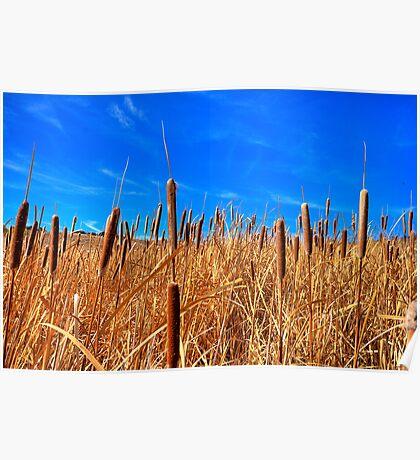 Hot Dog Reeds Poster