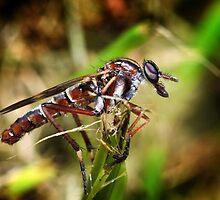 Wasp by Colin  Ewington