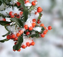 Red berries by ClaireWroe
