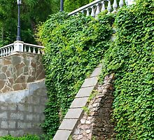 Old stone wall with ivy by vladromensky