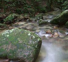 Creek - Mossman Gorge, Far North Queensland by Carissa Hubrechsen