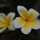 Frangipani Pair by Keith G. Hawley