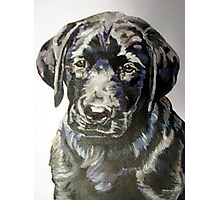 Black lab puppy by artist Debbie Boyle - db artstudio Photographic Print