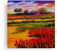 Red Tulips in the Netherlands Canvas Print