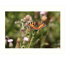 Small Tortoiseshell butterfly Art Print