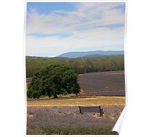 Lavender Farm, Tasmania Poster