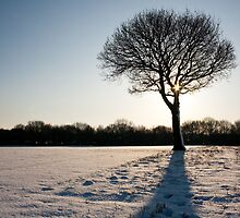 The Lone Tree by Squawk