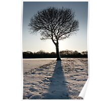 Tree portrait in the snow Poster