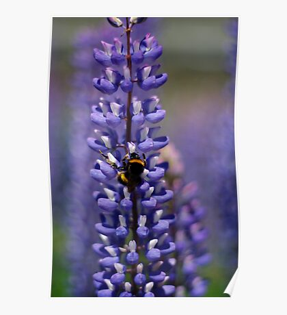 Busy bee lupin landing Poster