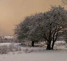 Winter Wonderland 2 by DutchLumix