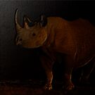 BLACK RHINO - NIGHT by hugo