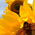 buzzing sunflower by kenkrash