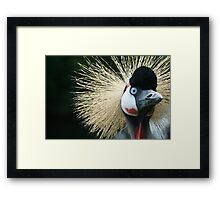 Wacky Bird - Bad hair day.  Framed Print