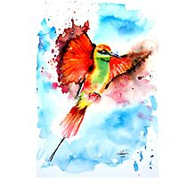 Green Bee Eater Photographic Print