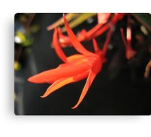 Red Ruler Canvas Print