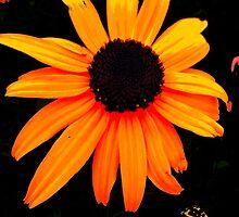 floral 123 by Chuck Landskroner