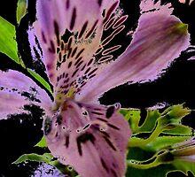 floral  1309 by Chuck Landskroner