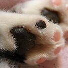 Kitty Paws by angelandspot