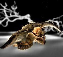 Goat Skull by Roddy Atkinson