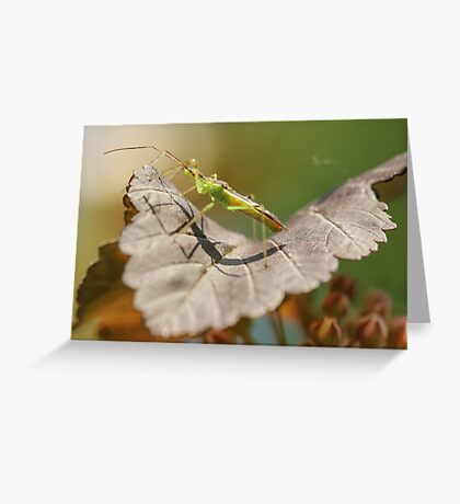 Green Insect Greeting Card
