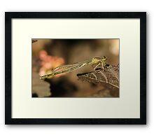 Dragonfly Wings Framed Print