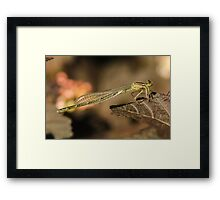 Dragonfly Wings Framed Print