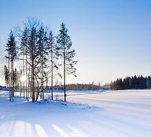 Winter landscape by Olga Polyakova