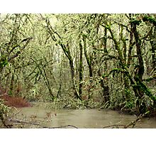 Forest Flood Photographic Print