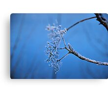 Beautiful Frosted Star Canvas Print