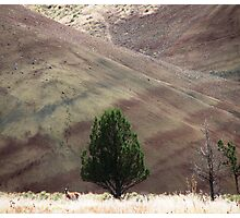 John Day Fossil Beds Sept. Pronghorn Photographic Print