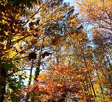 Autumn's glory in bronze, gold and scarlet by Meredith Wickham