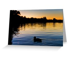 Evening Swim Greeting Card